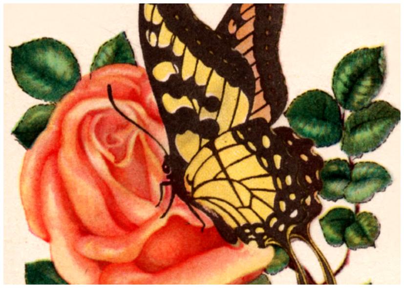 קעקועי פרפרים ופרחים
