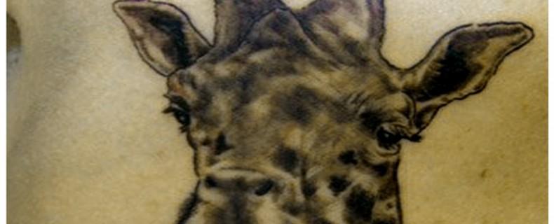 קעקועים של חיות ופירושם